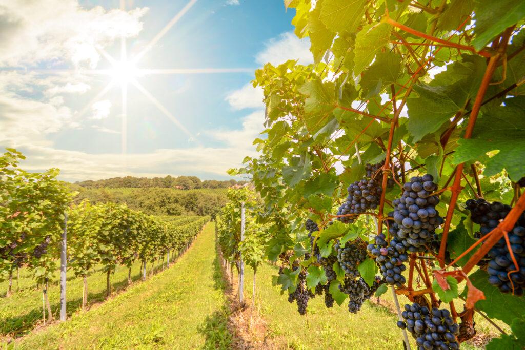 Australian Wine exports keep strong despite weather